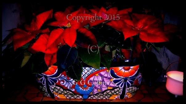 Santa Fe Poinsettias Copyright G G Collins
